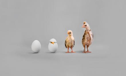 Nuestros gestores rebajan el peso de renta variable en los perfiles MyInvestor